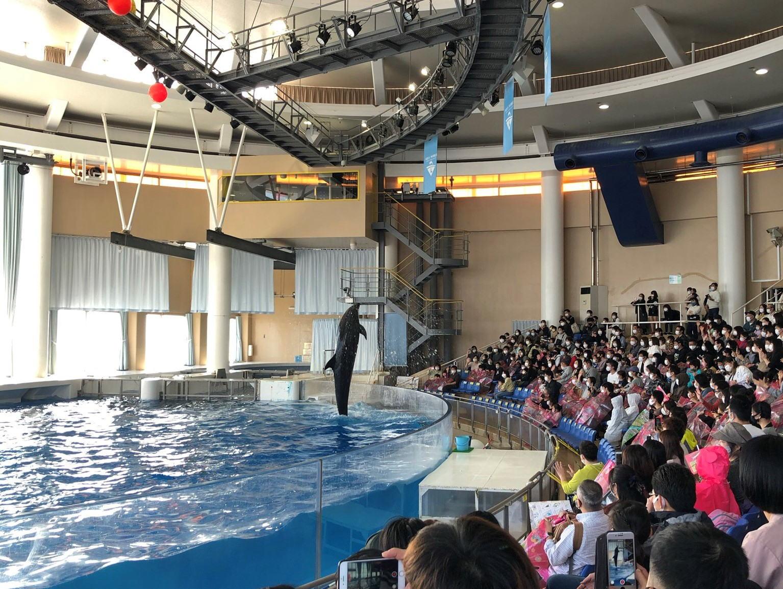 アクアワールド大洗水族館でイルカショーを楽しみました